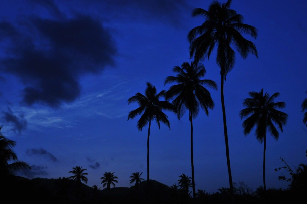 The silhouettes of palm trees against blue sky is an important visual theme in the Tayrona National Park on the Caribbean coast of Colombia